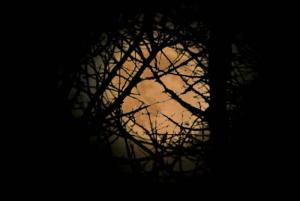 full_moon_behind_trees